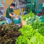 Um dos objetivos do projeto é preservar a produção vegetal catarinense de pragas e doenças (Foto: Lucas Gabriel Diniz/Agência AL)