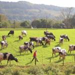 Um conjunto de ações foi tomado, para acertar o passo, fazendo com que o produtor de leite melhorasse seu resultado
