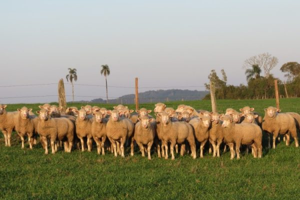 O programa atende 164 produtores rurais de ovinos do Estado